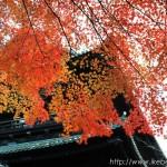 南禅寺山門の紅葉